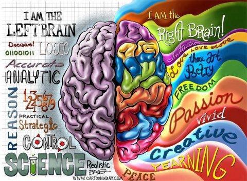 brain halves