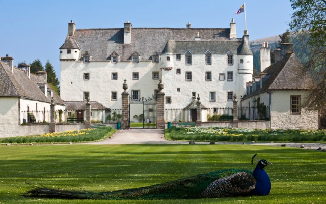 United Kingdom, Scotland, Borders, Tweed Valley, castle of Traquair House, peacock
