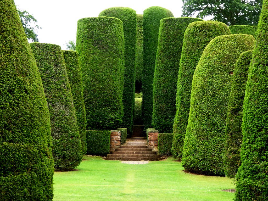 Yew trees and the Sermon on the Mount